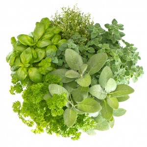 variety fresh herbs isolated on white background. marjoram, parsley, basil, rosemary, thyme, sage